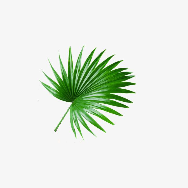 手绘  树叶   简单  绿色             此素材是90设计网官方设计