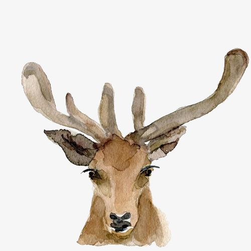 手绘水彩绘画动物麋鹿