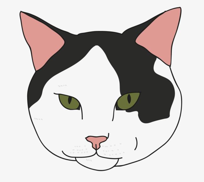 黑白小猫咪