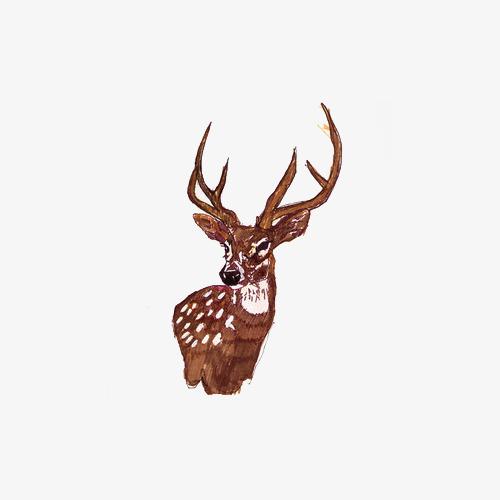 手绘水彩绘画动物梅花鹿