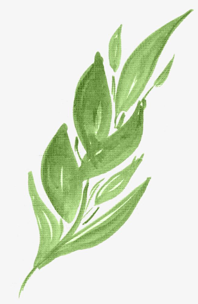 手绘水彩绘画绿叶