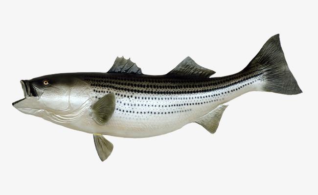 大鱼注册开户_张嘴的大鱼