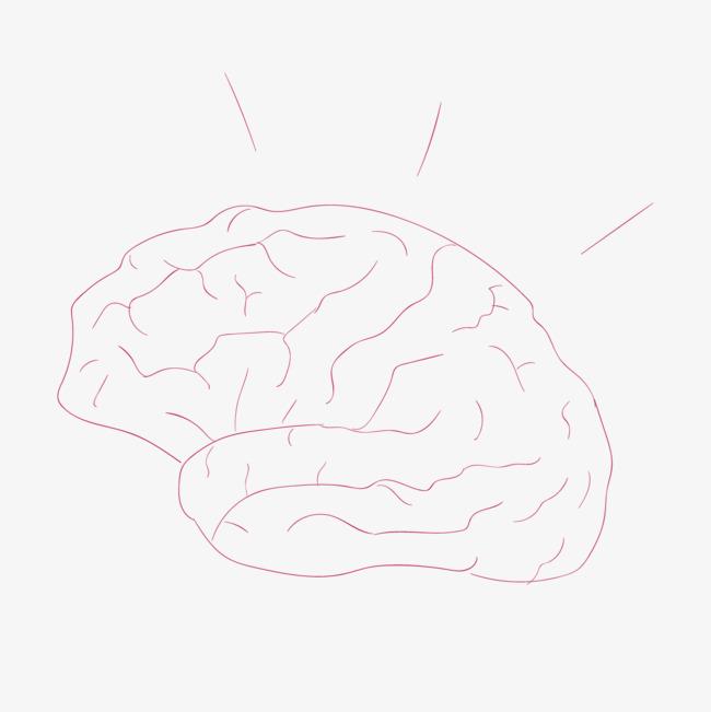 大脑的手绘艺术图