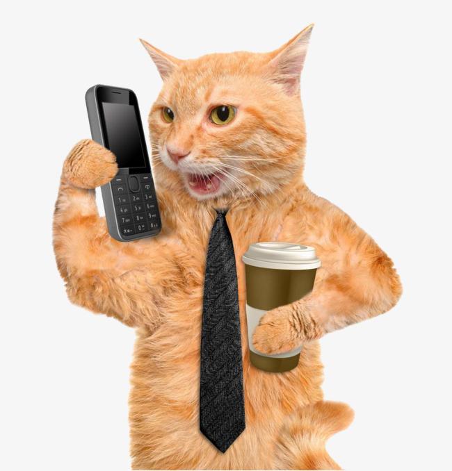壁纸 动物 猫 猫咪 毛绒玩具 玩偶 小猫 桌面 650_678