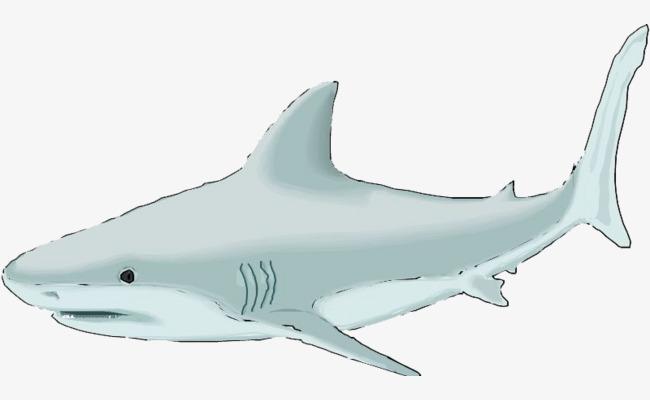 手绘的鲸鱼