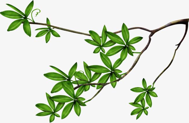 树藤_手绘小清新风格绿色树叶枝芽素材-90设计