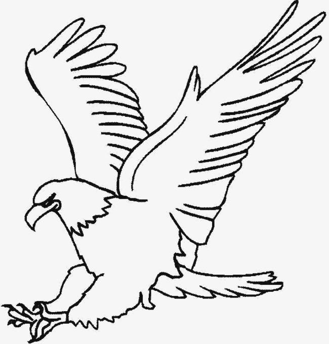 手绘的老鹰