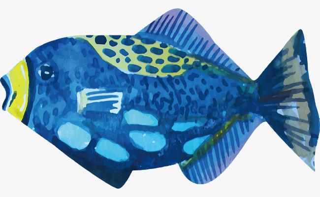 蓝色热带鱼图片