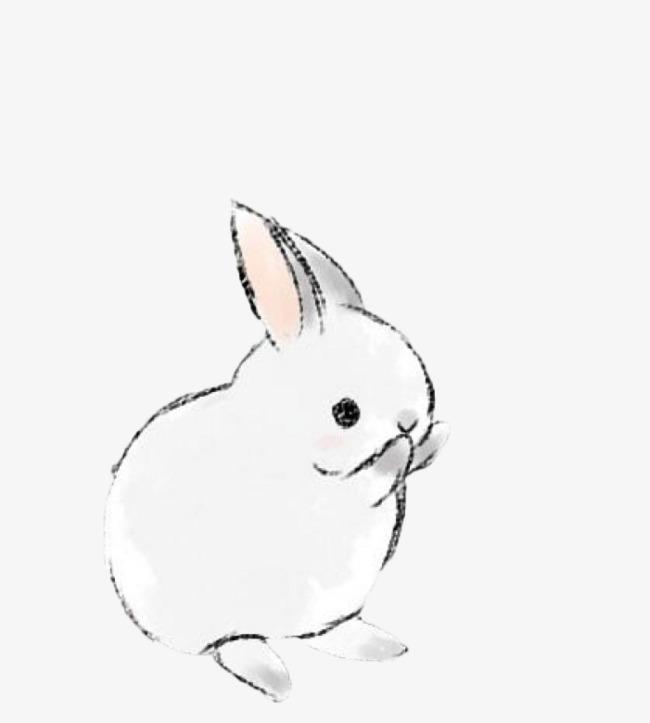 洗脸的小兔子