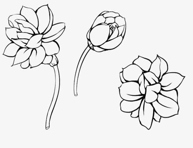 茉莉花 花卉 手绘 工笔 花朵 中国风 黑白风 植物 手绘茉莉png免费