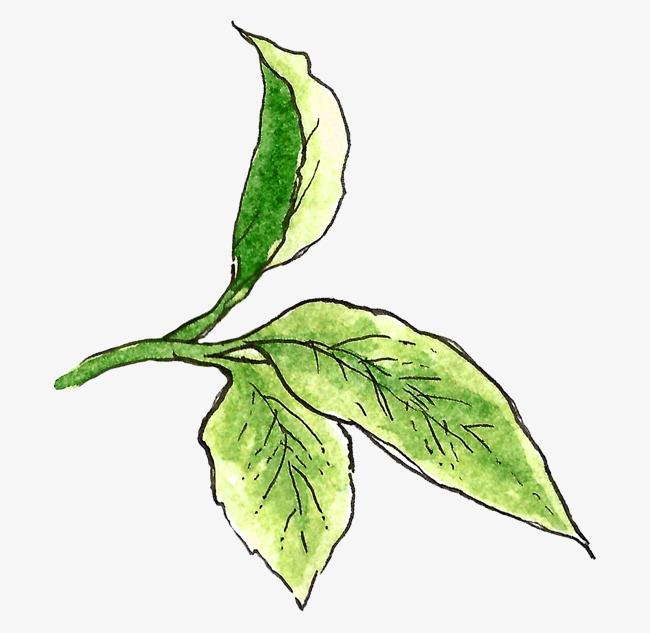 背景 壁纸 绿色 绿叶 树叶 植物 桌面 650_633