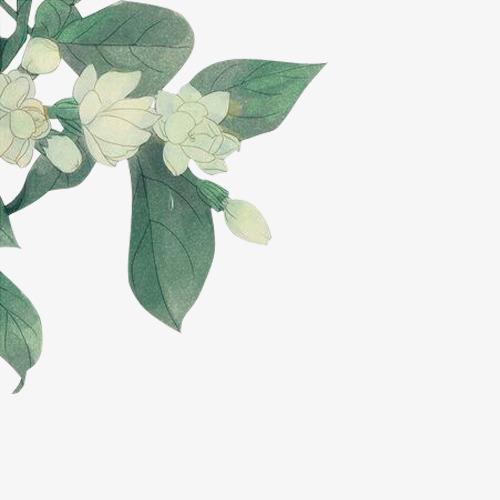 复古手绘茉莉花
