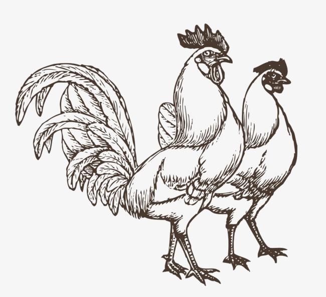 图片 > 【png】 两只公鸡  分类:手绘动漫 类目:其他 格式:png 体积