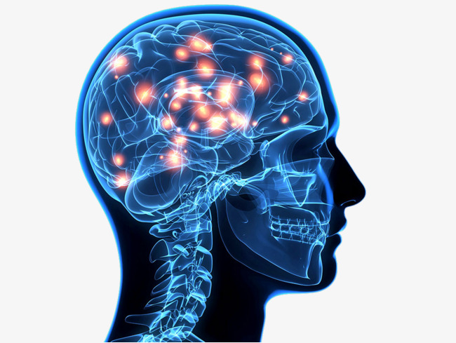 脑部结构图名称