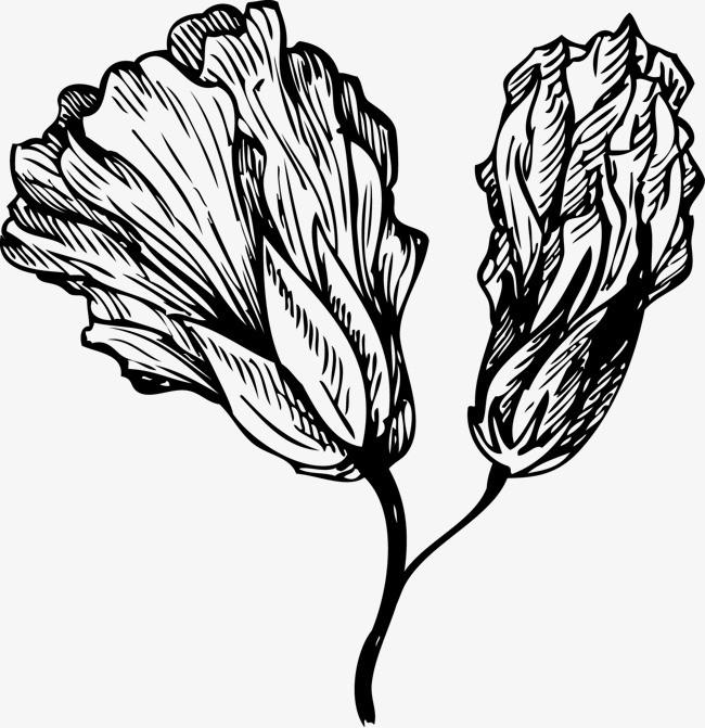 手绘的花卉