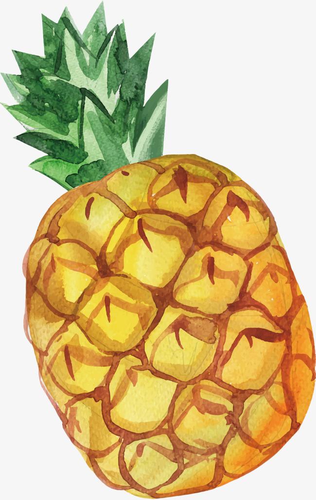 手绘水彩菠萝