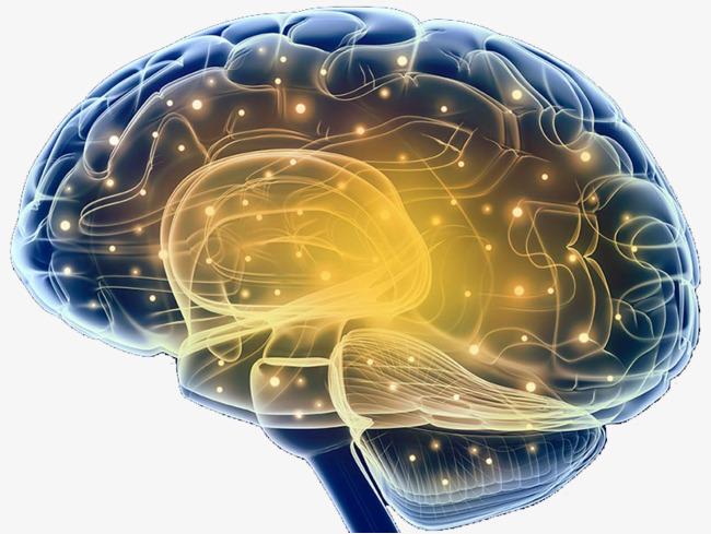 大脑结构神经元示意图