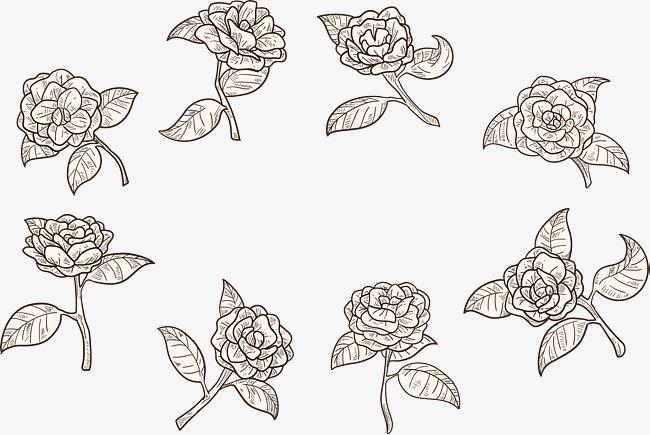 手绘蔷薇花线稿