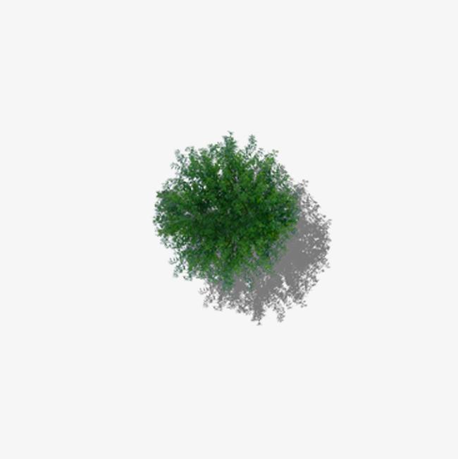 俯视茂盛的树顶png素材下载_高清图片png格式(编号:)