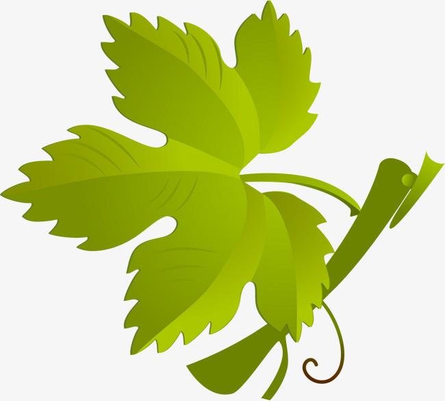 手绘绿色葡萄叶子元素