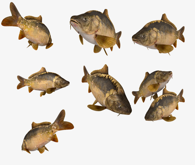 海鱼简图图片