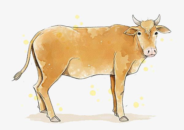 一头牛简图图片