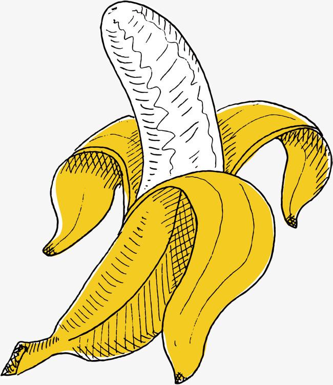 矢量手绘香蕉