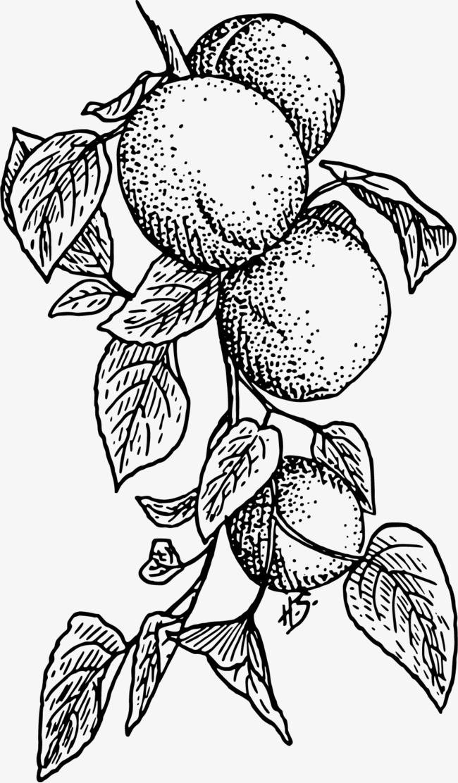 果实上的树枝visio怎么绘制uml图图片