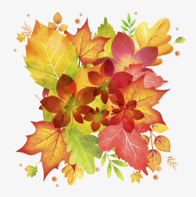 图片 > 【png】 枫叶水彩画  分类:手绘动漫 类目:其他 格式:png 体积