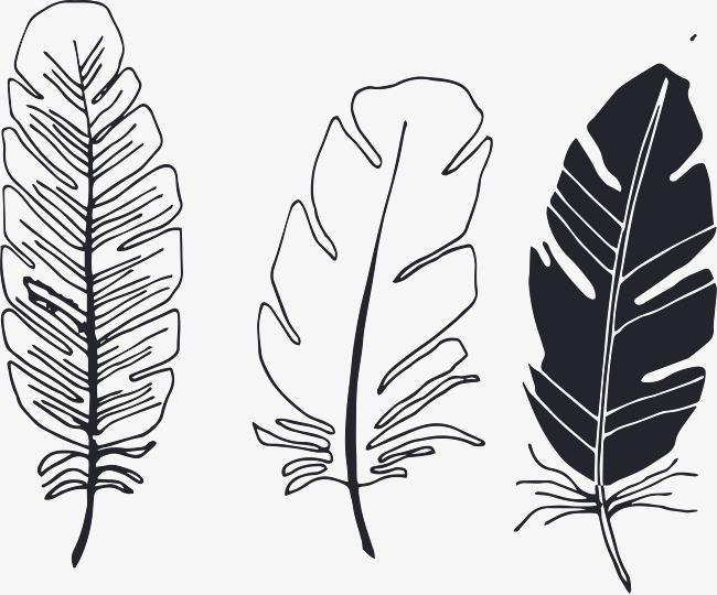 羽毛图片手绘简笔画