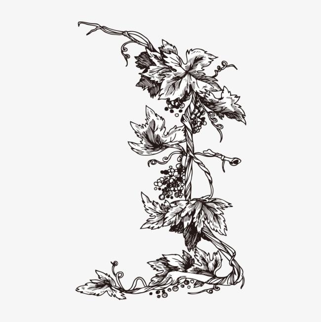 手绘黑色植物_png素材免费下载_ 1000*1000像素(编号
