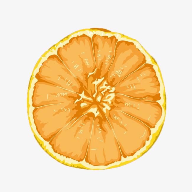柑橘横截面手绘效果图