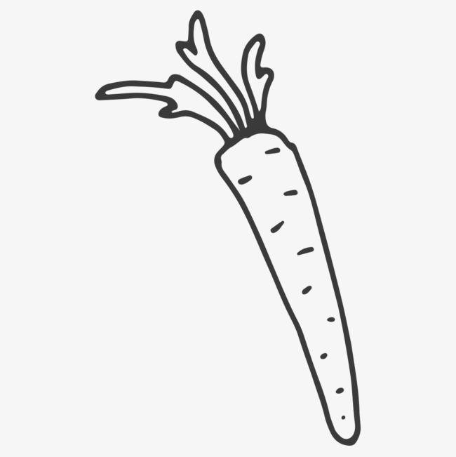 简笔胡萝卜
