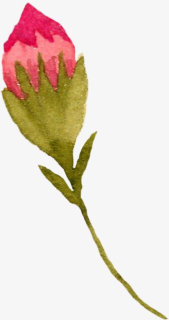 手绘花卉水彩花卉 底图 装饰图案 漂亮花卉 设计底图 一枝花 含苞待