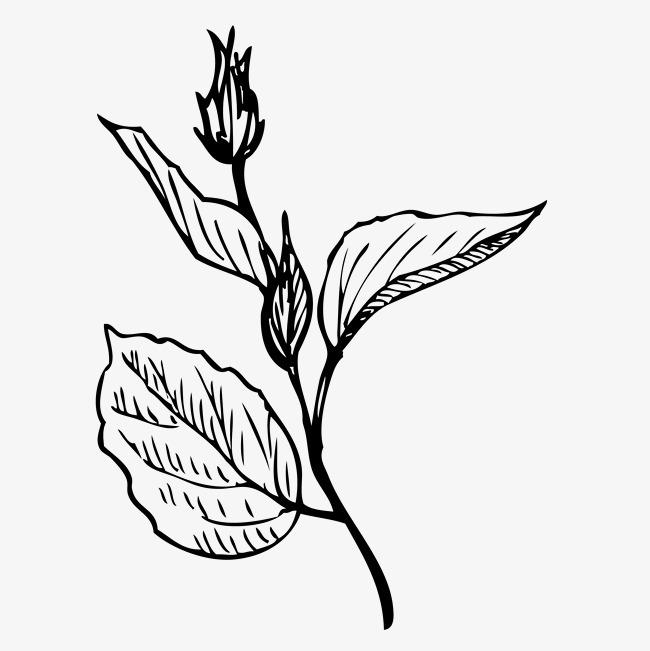 手绘植物花卉叶子手绘 黑白 线描叶子 叶子装饰 叶子速写png免费下载