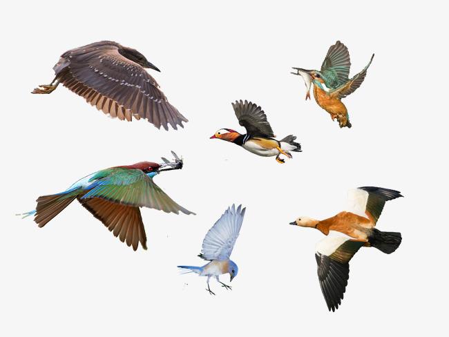 壁纸 动物 鸟 摄影 小鸟 桌面 650_488