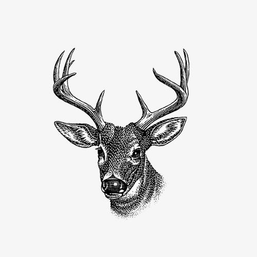 手绘的小鹿