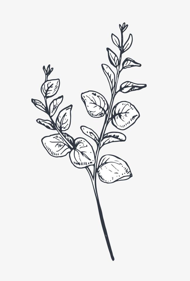 手绘花盆线描图案