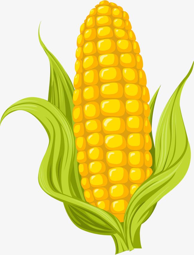 图片 > 【png】 卡通黄色玉米  分类:手绘动漫 类目:其他 格式:png