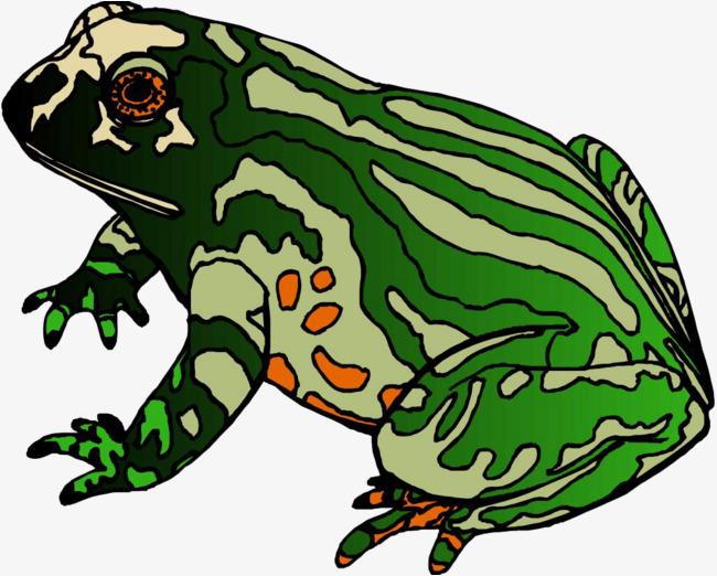 花皮肤牛蛙 绿色牛蛙 花纹牛蛙 手绘花纹牛蛙 牛蛙 手绘牛蛙 卡通