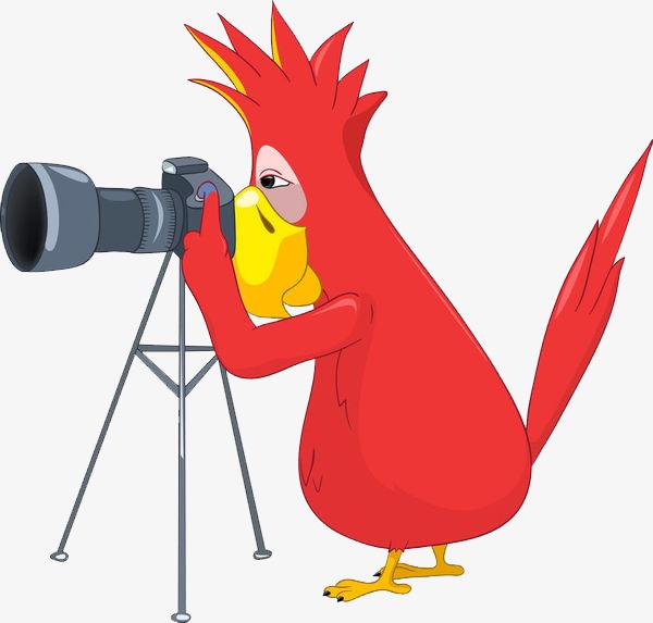 鹦鹉相机简笔画_png素材免费下载_ 600*573像素(编号