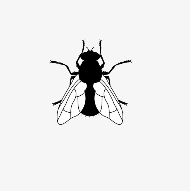 昆虫手绘画照片
