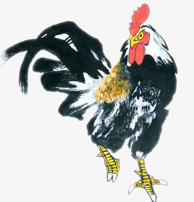 鸡子有几种_行走的鸡子