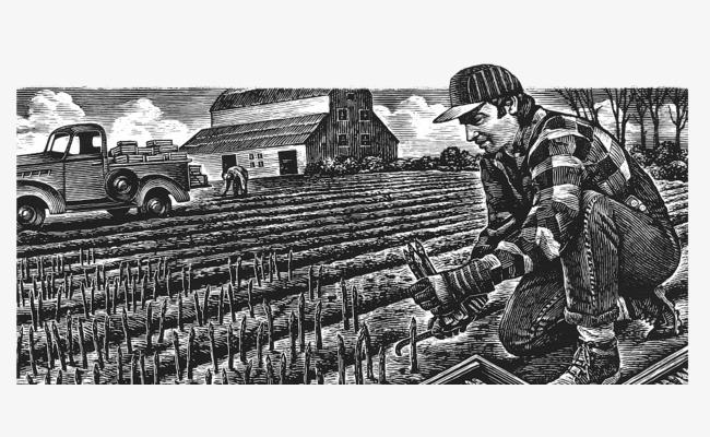 黑白手绘素描插画种地的农民