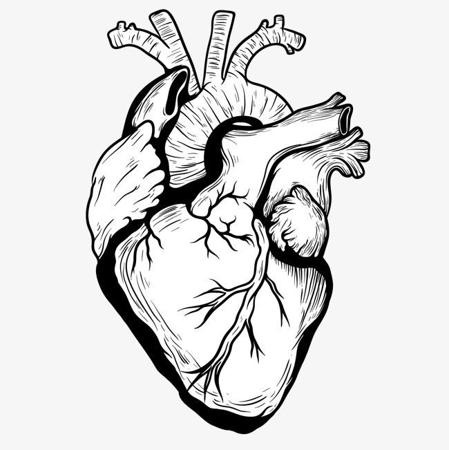 手绘心脏设计矢量素材