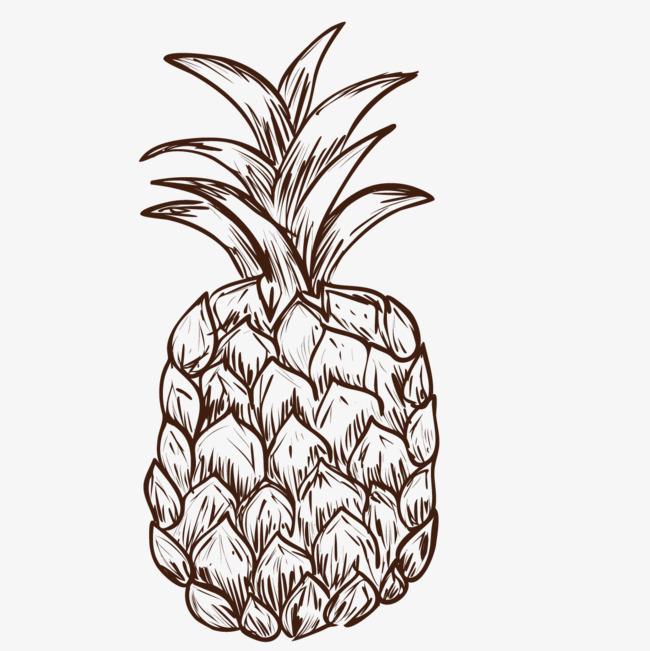 手绘的菠萝