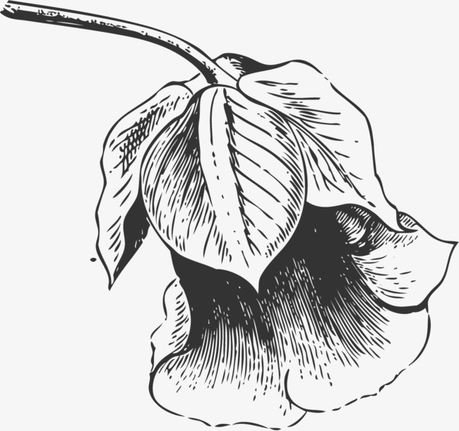 图片 装饰元素 > 【png】 黑色素描花朵  分类:装饰元素 类目:其他图片