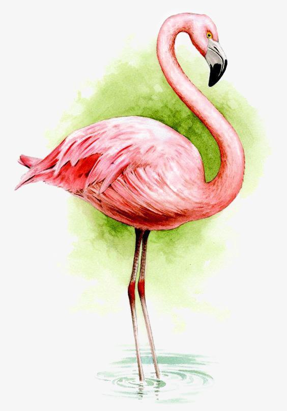 设计感 卡通火烈鸟 手绘 创意 免扣png ppt设计感 卡通火烈鸟 手绘