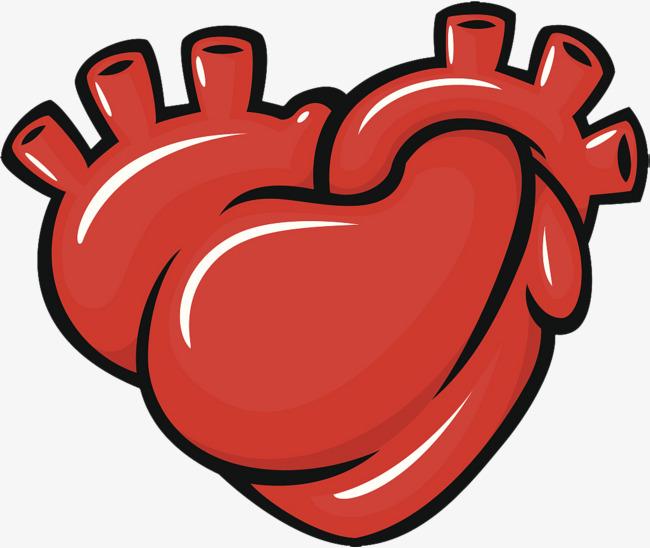 手绘心脏器官