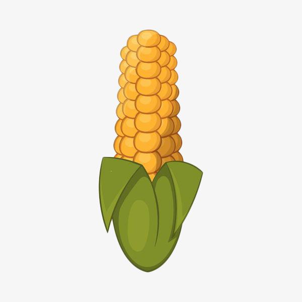 手绘简约玉米